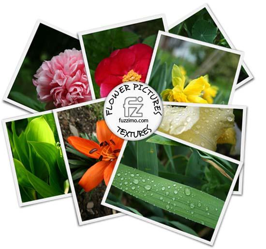 fzm-FlowerPictures