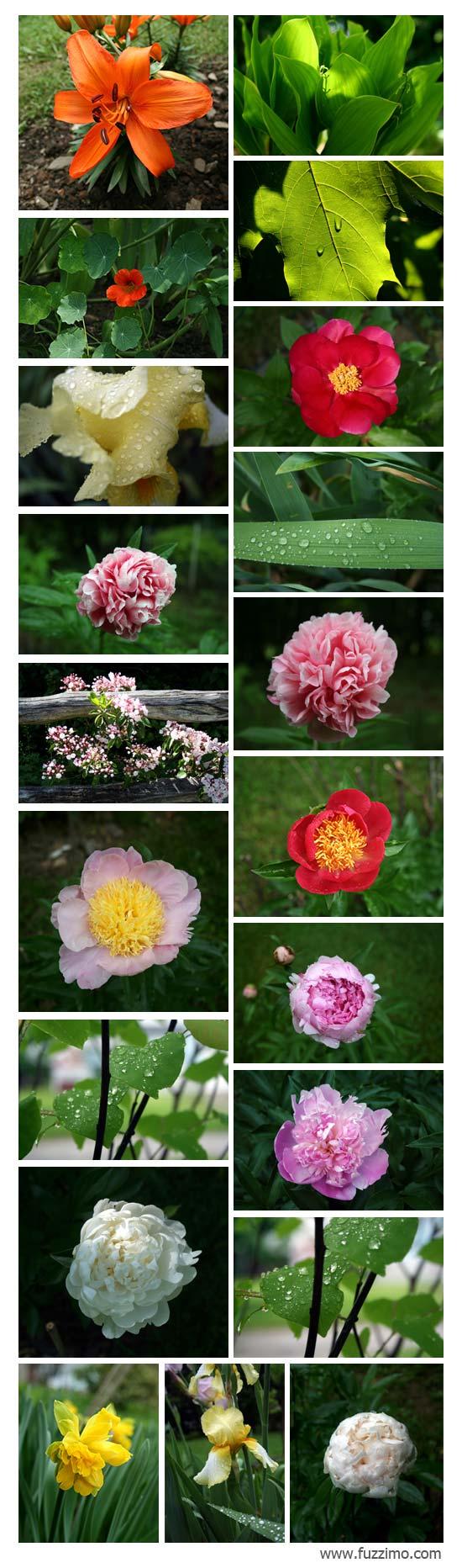 fzm-FlowerPictures-02