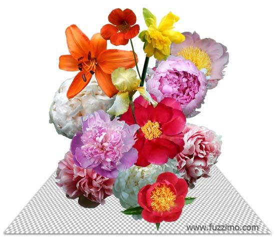 fzm-FlowerPictures-03