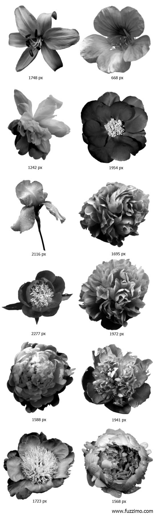 fzm-PhotoshopFlowerBrushes-02
