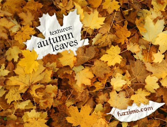 fzm-Autumn Leaves Textures 01