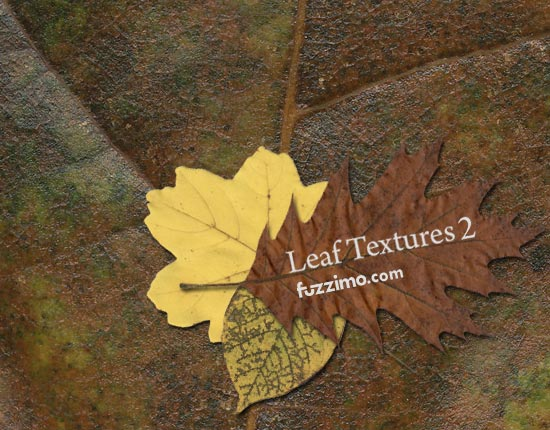 fzm-Leaf-Textures-(2)-01