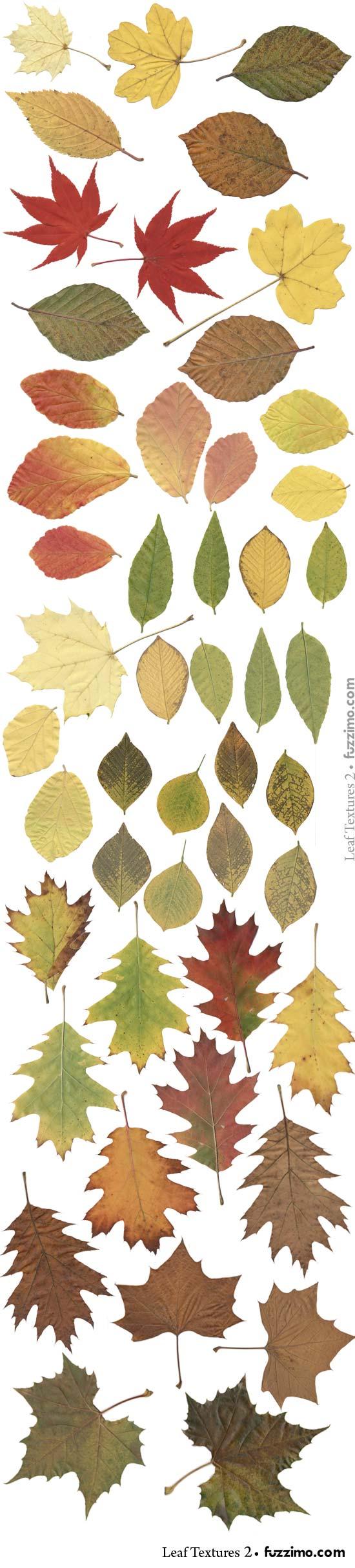 fzm-Leaf-Textures-(2)-02