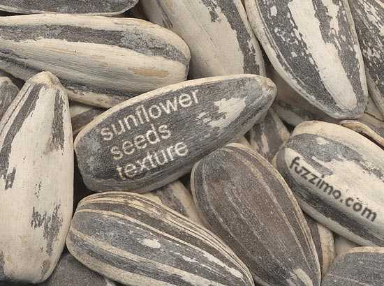 fzm-sunflower-seeds-texture-01