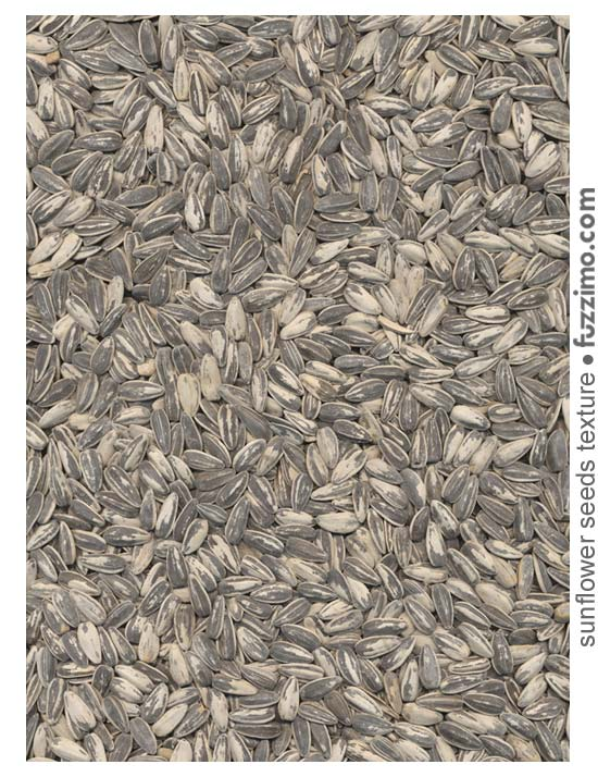 fzm-sunflower-seeds-texture-02