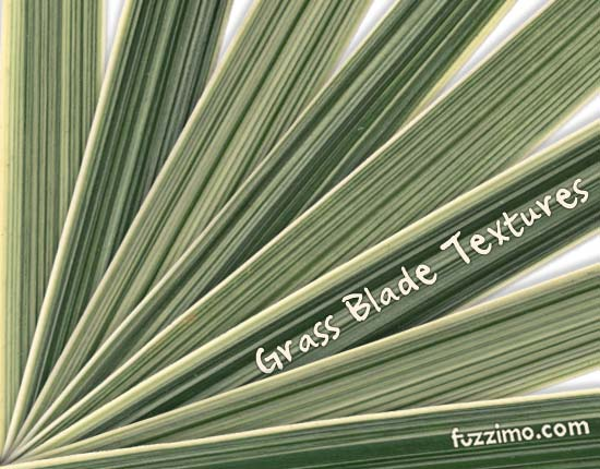 fzm-Ornamental-Grass-Blade-Texture-01